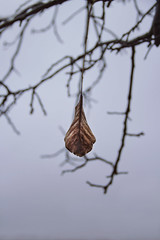 Lonely (Nanihta (Sol Vzquez)) Tags: november autumn stilllife storm cold tree fall hoja leave love wet sadness mood alone sad cloudy minimal noviembre rainy freeze rbol otoo lonely bookcover minimalism conceptual emotions fro ramas emociones autumniscoming nanah oneleave conceptualphotography sadmood arcangelimages missautumn minimalnature minimalmood nanihta solvzquezphogotraphy nanihtafotografa