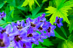Garden \  (andreyalpha) Tags: summer plant flower color green nature ecology floral garden season village purple farm background sony florist agriculture herb