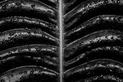 20150826-X-Pro1-DSCF0208.jpg (anders.acp) Tags: seattle washington fuji august conservatory adapter volunteerpark volunteerparkconservatory 2015 pentaxlenses xpro1 pentax50mmf4macro fujixpro1 anderscarlson andersphotos august2015