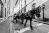 Old Port Montreal (pp.huet) Tags: horse oldportmontreal nikon1635mmf4vr nikond750
