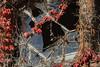 Beelitz-Heilstätten Oktober 2015 (Project-X-Team) Tags: deutschland iso200 decay urbanexploration f71 brandenburg urbex verfall beelitzheilstätten 140mm beelitz canoneos350ddigital projectxteam