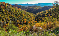 Blue Ridge Pkwy-7946 (kasiahalka (Kasia Halka)) Tags: nc asheville outdoor northcarolina blueridgeparkway 151 westernnorthcarolina