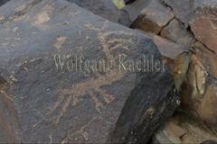 30095311 (wolfgangkaehler) Tags: old animal animals rock asian ancient asia desert deer mongolia centralasia petroglyph gobi reddeer blackmountains petroglyphs mongolian gobidesert southernmongolia