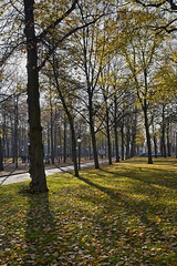 "Lange Voorhout • <a style=""font-size:0.8em;"" href=""http://www.flickr.com/photos/45090765@N05/22659977941/"" target=""_blank"">View on Flickr</a>"
