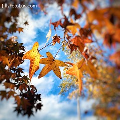 Fall is in the air! (jillsfotoluv) Tags: autumn trees sky fall leaves yellow clouds