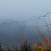 Pássaros migrando para o sul
