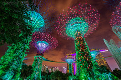 Gardens by the Bay@night (Oliver H16) Tags: singapur asien nikon d7000 wolken wasser city nachtaufnahme nightshot langzeitbelichtung night longexposure skyline chinatown downtown panorama singapurflyer singaporeflyer marinabaysands helixbrücke gardensbythebay esplanade sunteccity