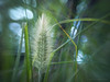 Crazy lens (Petra Ries Images) Tags: refittedlens canon110ed26mmf20 canon110ed bokeh manualfocus adapedlens manuallens swirlybackground swirl blur spots flower green grass gras grün