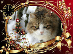 Merry Christmas ♥ (Xena*best friend*) Tags: boss merrychristmas cats whiskers feline katzen gatto gato chats furry fur pussycat feral tiger pets kittens kitty piedmontitaly piemonte canoneos760d italy wood woods wildanimals wild paws animals calico markings ©allrightsreserved purr digitalrebelt6s efs18135mm flickr outdoor animal pet winter