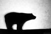 Macro Mondays: Just White Paper. Silhouette (mc_icedog) Tags: winnipeg manitoba canada mb white paper silhouette monochrome closeup object polar bear backlit macro mondays