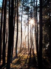 Good morning (Petr Horak) Tags: mft manuallens nature nokton nokton175mmf095 plant sun sunflare sunset tree voigtländer woods microfourthirds penf winter novýknín středočeskýkraj czechia cze