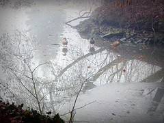 2017-01-09 at the pond (82) (april-mo) Tags: wood bois trees arbres nord france brume fog foggy mist