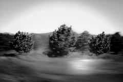 T R I A D A (creonte05) Tags: explore eduardomiranda flickr nikon 2017 blackandwhite blancoynegro paisaje landscape bw d7100 chile flickr2017 blur explored blurscape exteriores texture nature textuta naturaleza square trees wonderworld curico rural arbol enero yourbestshot2017 icm