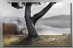 Mooring Tree (Bill McKenzie / bmphoto) Tags: lochard landscape loch mist mooring trossachs best boats scenic scotland stirlingshire 0c