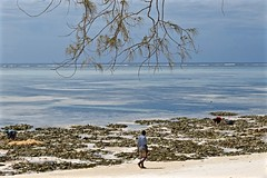 Another Beach, Another Mood (The Spirit of the World) Tags: beach whitesand ocean sea seaview seascape waterscape indianocean zanzibar eastafrica waves seaweed locals tree nature