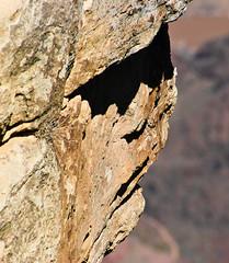 """Rock Face"" in Profile (driaraingab) Tags: arizona face rock grandcanyon"
