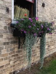 53/ windows & doors ~the sequel~ (s@ssyl@ssy) Tags: flowers ontario window stjacobs brooms flowerbox hww cornbrooms windowwednesdays