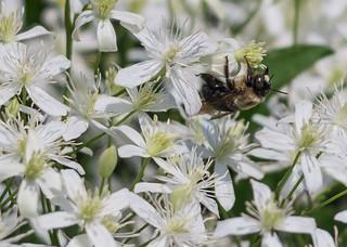 Upsidedown bee