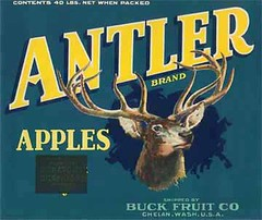 """Antler • <a style=""""font-size:0.8em;"""" href=""""http://www.flickr.com/photos/136320455@N08/21480310081/"""" target=""""_blank"""">View on Flickr</a>"""