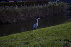 Floriade_251015_11 (Bellcaunion) Tags: park autumn fall nature zoetermeer rokkeveen florapark