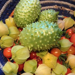 "We are expecting a very cold evening tonight with temperatures in the 30s. I harvested everything that the garden had to offer including these husk cherries, burr gherkins, and cherry tomatoes.  I plan to enjoy every last bite that the garden can provide. • <a style=""font-size:0.8em;"" href=""http://www.flickr.com/photos/54958436@N05/22207775586/"" target=""_blank"">View on Flickr</a>"