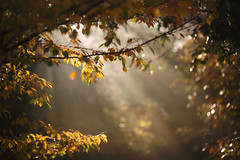 Into the light (Tammy Schild) Tags: morning autumn trees light fall nature leaves sunrise branch bokeh sunrays