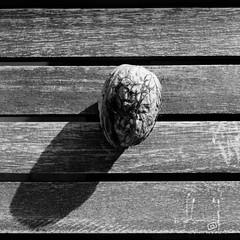 walnut (piri198) Tags: bw white black canon eos lightroom walnuss 22mm eosm mirrorless spiegellos eosm3 lightroom6