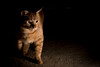 What's that? (^Baobab^) Tags: orange zeiss cat sony tabby alpha autofocus 55mmf18 kittysuperstar bestofcats vg~catsgallery sonnartfe1855 a7r2 ilce7rm2