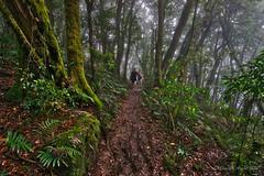 Bushwalkers on the Border Track (NettyA) Tags: mist green leaves misty forest rainforest track mud australia trail bushwalking qld queensland ferns oreillys bushwalk unescoworldheritage lamingtonnationalpark gondwana 2015 scenicrim bushwalkers seqld sonya7r janetteasche aurorahdrpro