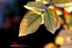 leaves...fall in (dimitra_milaiou) Tags: world city friends light shadow color colour tree leave love nature beautiful leaves lines yellow 35mm happy golden leaf nice europe moments poetry d