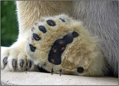 1923 (The Giant Animals) Tags: man feet giant foot paw paws sole stomp crush