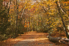 Bear Mountain (Joy Jihyun Jeong) Tags: road bear new york trip autumn red mountain ny fall nature colors beautiful beauty leaves forest woods natural hiking nj hike jersey