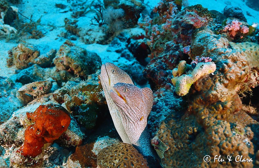 Incontri per subacquei