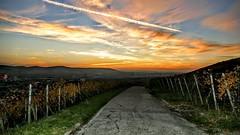 1060536~3 (Rolfmundi) Tags: sonnenuntergang reben weinberg remstal gundelsbach