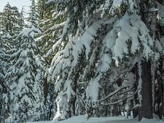 PC030441-1 (Camera Bread) Tags: olympus olympusomdem5 omdem5 omd em5 olympusem5 craterlake craterlakenationalpark snow snowshoe snowshoeing winter wintertime winterhiking hikinginwinter oregon