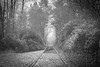 Heyday (Warwick Tams) Tags: bw black white monochrome canon 5d mark iii heaton park manchester prestwich tram tramlines woods woodland track trackway cobbles vignette trees history heyday