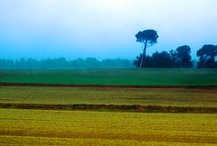 inclinado (puesyomismo) Tags: inclinado arbol verde amarillo nubes niebla campo azul inclined tree green yellow clouds fog field blue pente arbre vert jaune nuages brouillard champ bleu abfallend baum grün gelb wolken nebel wiese blauer