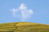 _MG_9736.1011.Cầu Ba Nhà.Chế Cu Nha.Mù Cang Chải.Yên Bái (hoanglongphoto) Tags: asia asian vietnam northvietnam northwestvietnam landscape scenery vietnamlandscape vietnamscenery vietnamscene terraces terracedfields terracedfieldsinvietnam harvest outdoor sky bluessky cloud hill tophill hillside canon canoneos5dmarkii canonef70200mmf28lisiiusmlens tâybắc yênbái mùcangchải chếcunha cầubanhà phongcảnh ruộngbậcthang lúachín mùagặt bầutrời bầutrờimàuxanh mây ngọnđồi đámmây đỉnhđồi sườnđồi ruộngbậcthangmùcangchải mùcangchảimùalúachín