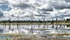 A little bit of magic (Chantal De Cock) Tags: neak pean cambodja angkor water trees reflection