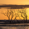 branches (cbonsig) Tags: costarica guanacaste samara provinciadeguanacaste cr