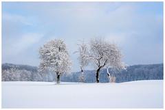 Zima na Roztoczu Wschodnim (Tomasz_M) Tags: roztocze roztoczewschodnie zima snow winter white tamronlens tamron 1750 mm f28 canon 20d eos20d eos