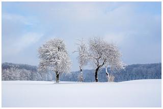 Zima na Roztoczu Wschodnim