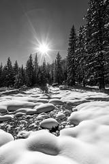 Sierra Nevada Thermal Energy (JarrodLopiccolo) Tags: california sierranevada snow winter trees pine grovershotsprings markleeville sun 1635mm landscape outdoor white