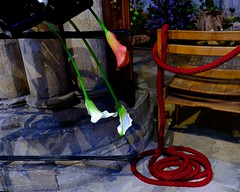 Callas with coils (Nanny Bean) Tags: riponcathedral callalilies coils rope shadows