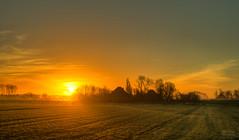 Dutch farms waking up to a spectacular sunrise. (Alex-de-Haas) Tags: 50mm d5 hdr holland hollandseluchten nederland netherlands nikkor nikkor50mm nikon nikond5 noordholland thenetherlands westfriesland beautiful beauty boederij boerenland buiten buitenshuis daglicht daylight farmhouse farmland fieryskies fog foggy grasslands handheld highdynamicrange landscape landschap licht light meadow meadows mist mistig misty mooi morning ochtend orangeskies outdoor outdoors polder schoonheid skies sky skyfire sun sunrise sunriselight warm weiland weilanden winter zon zonsopgang