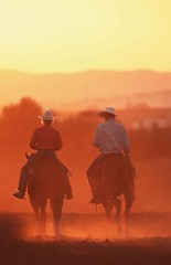 Cowboy, Quarter Horse , Equus przewalskii f. caballus, domestic horse (lotharlenz) Tags: cowboy sonneuntergang sauber qh quarterhorse reiten cover kalender titel poster caballo cavalo cheval equus häst hest hestur hobu horse konj paard pferd zirgs