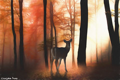 """The earth (gusdiaz) Tags: photomanipulation photoshop digital art deer forest beautiful bosque venado trees arboles vsco sunrays sunny sun asoleado"