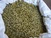 Green moong beans (joegoauk73) Tags: joegoauk goa panaji mung
