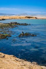 Paracas-151 (m.lencioni3) Tags: paracas peru perù quad ocean pacific pacifico oceano pellicano birds southamerica sony sonya7 fe35mmf28zazeisssonnart fe55mmf18zazeisssonnart konicaminolta1735mmf2845 tour travel trip gringotrail