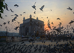 """WAKING UP THE CITY THAT NEVER SLEEPS...! GOOD MORNING, MUMBAI"" (GOPAN G. NAIR [ GOPS Photography ]) Tags: gopsorg gops gopsphotography gopangnair gopan photography gateway india mumbai bombay pigeon morning sunrise arabian sea"